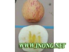 陕西渭南条红红富士苹果批发价格