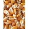 最新玉米价格,常年收购大量玉米高粱荞麦碎米油糠大豆次粉