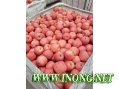 山东优质苹果批发
