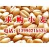 饲料厂常年求购玉米、小麦、大米、糯米、高粱等原料