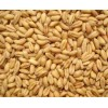 蜀窖酿酒公司诚意求购小麦碎米糯米木薯淀粉玉米小麦