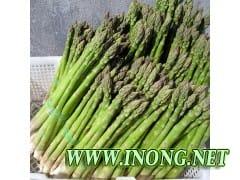 芦笋种子 芦笋种苗 芦笋蔬菜种子