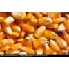新玉米上市价格;汉江大量收购;现金结算