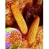 成都华粮求购玉米小麦高粱缅甸大米碎米糯米木薯淀粉