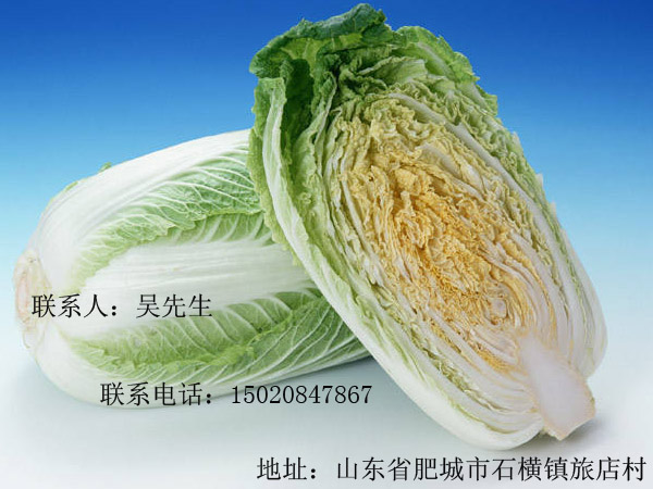 大白菜青萝卜