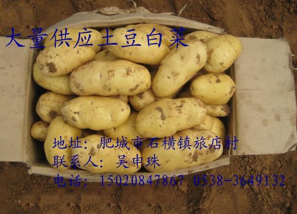 大量供应土豆白菜