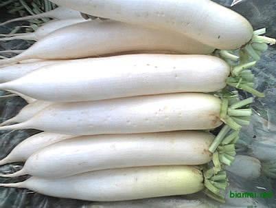 白萝卜条,白菜