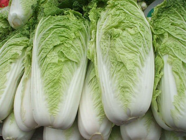 供应白菜、芥菜