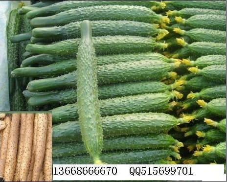 供应:黄瓜