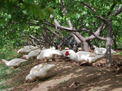 黄山推进畜禽废弃物资源化利用