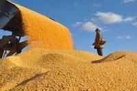 汉江求购;玉米;荞麦;高粱;黄豆;碎米等农副产品