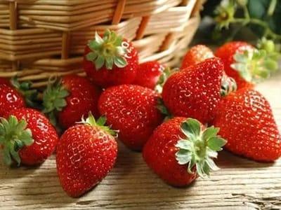 上海:乡村振兴发展从草莓开始