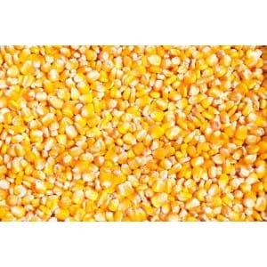 求购糯米高粱玉米大米碎米小麦等原料
