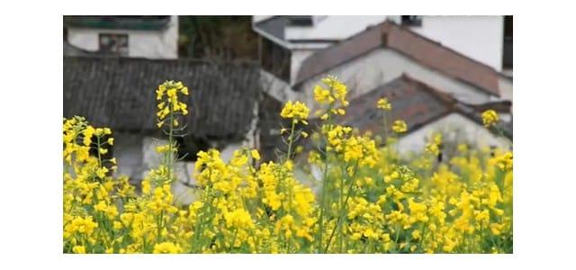 鲜花盛开美如画 踏青赏花正当时