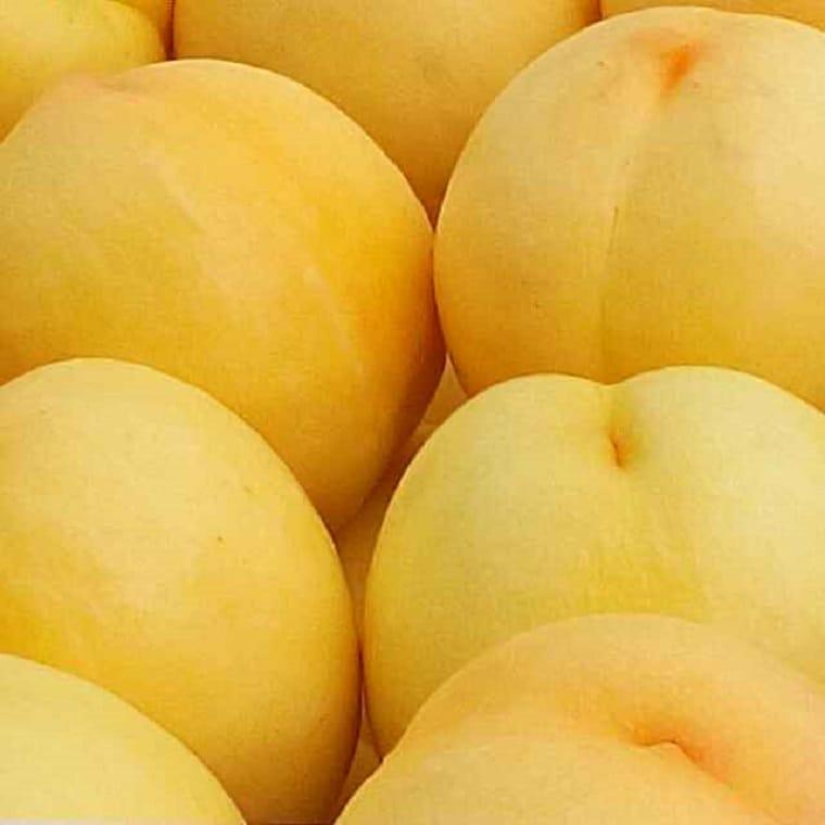 供应新品种桃树苗大个脆甜黄桃