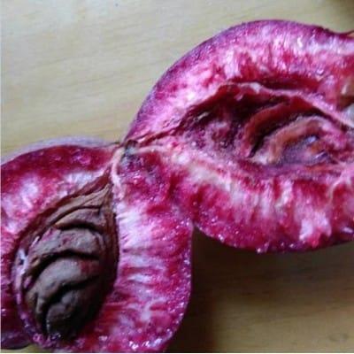 供应新品种桃树苗紫桃苗价格