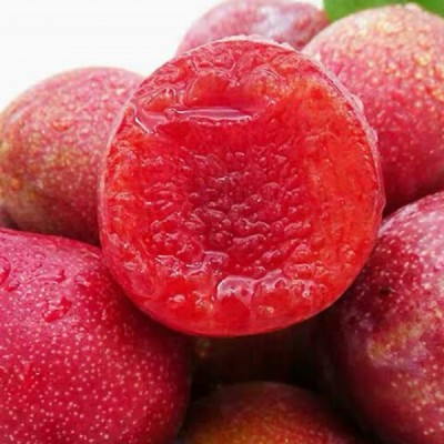 供应李子苗品种桃形李树苗价格