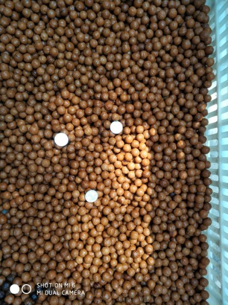 供应粒径9-45mm美国猴头核桃