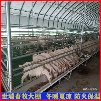 搭建养羊大棚厂家 羊棚规划施工 山羊养殖棚安装包工包料